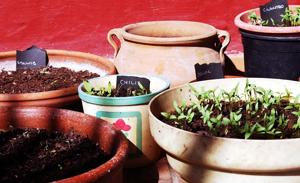 Common Mistakes First-Time Gardeners Make